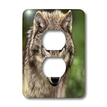 Multicolor USA Wolf wildlife-US27 TVE0006-Tom Vezo 2 Plug Outlet Cover 3dRose LSP/_92147/_6 North America Montana