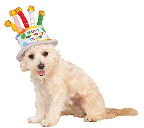 Birthday Cake Hat for Pet, Small/Medium