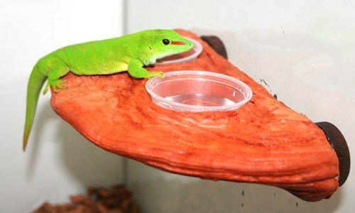 Magnaturals Gecko Ledge Mojave - Magnetic Decor