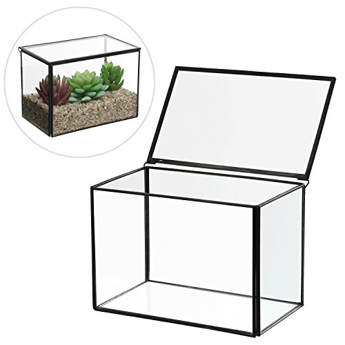 Glass Display Box (6.5 inch Clear Glass Rectangular Succulent Terrarium Box / Decorative Air Plant Garden Display Case)