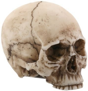 2.25 Inch Resin Realistically Painted Collectible Skull Head, - Resin Skull