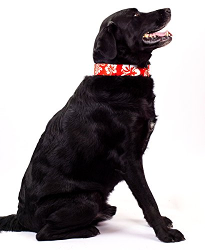 Image of Country Brook Design Red Hawaiian Martingale Dog Collar & Leash - Medium