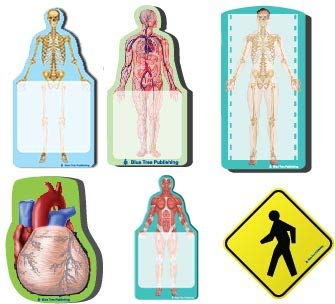 - Fun Anatomy Sticky Notes Collection, 6 Pack-100 Sheets Per Pack, Medical Note Pads and Great Gifts.