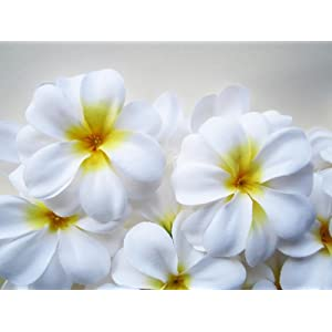 "(24) White Hawaiian Plumeria Frangipani Silk Flower Heads - 3"" - Artificial Flowers Head Fabric Floral Supplies Wholesale Lot for Wedding Flowers Accessories Make Bridal Hair Clips Headbands Dress 50"