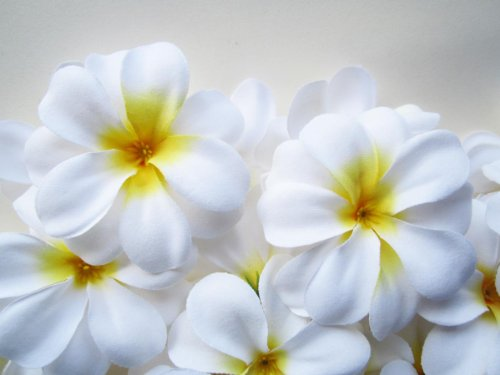 ((24) White Hawaiian Plumeria Frangipani Silk Flower Heads - 3