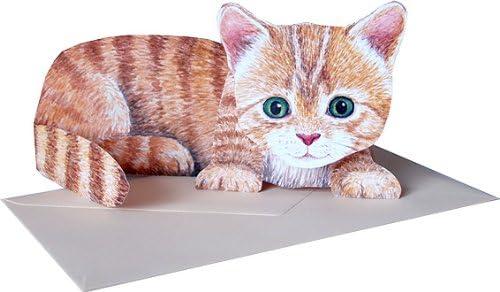 cardbox 7 Stück mit süßen Katzenmotiven Katze Kätzchen Kartenhülle ec-Karte