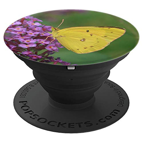 Orange Sulphur or Alfalfa Butterfly - PopSockets Grip and Stand for Phones and Tablets -