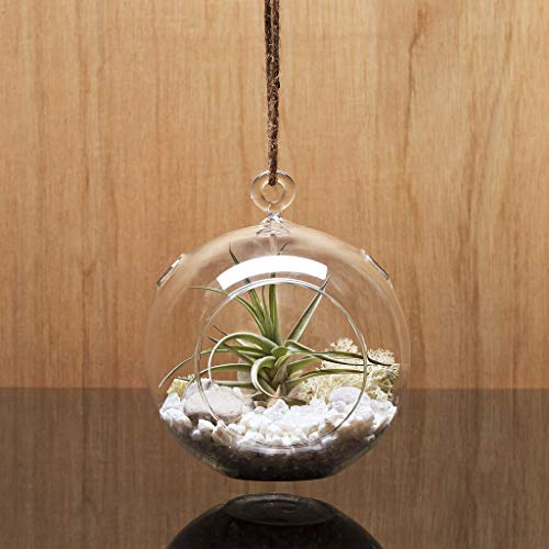 WGV Hanging Clear Glass Terrarium Globe Succulent Plant and Candle Holder Garden Planters (Set of 6) with One WGV Cleaning Cloth