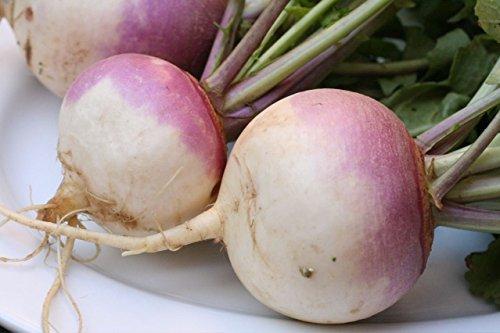 Turnip Purple Top Deer Food Plot by Seed Kingdom Bulk 3 Lb Seeds