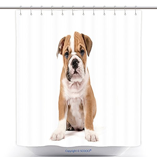 Polyester Shower Curtains Cute Puppy Of English Bulldog Isolated On White Background Selective Focus 440460079 Polyester Bathroom Shower Curtain Set With Hooks