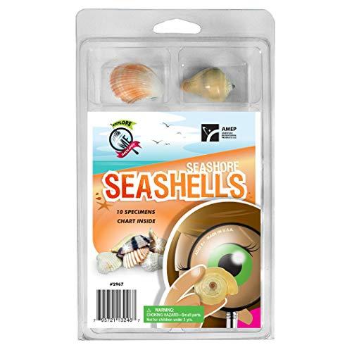 (Explore With Me Geology Seashore Seashells Set, 10 Specimens)