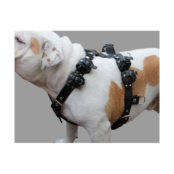 10 Lbs Black Genuine Leather Weighted Pulling Dog Harness for Exercise and Training. Fits 35″-44″ Chest Click on image for further info.