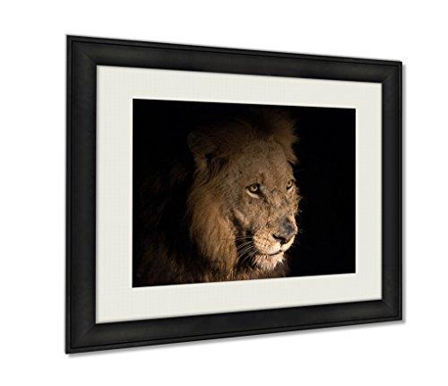 Ashley Framed Prints, Lion At Night, Wall Art Decor Giclee Photo Print In Black Wood Frame, Ready to hang, 24x30 Art, - Ebony Panthera