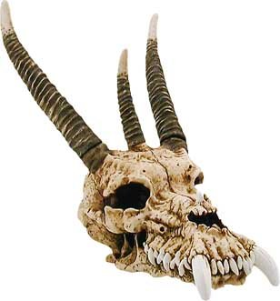Amazon Com Baby Dragon Skull Themed Classroom Displays And