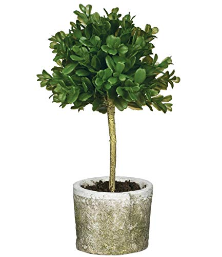 (Sullivans Mini Boxwood Topiary)