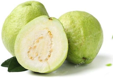 100 Pcs / Sac Goyave semences de légumes bio Fruits goyavier Graines Bonsai Goyave pot arbre pour jardin 1