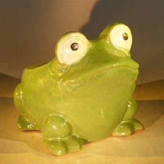 Bonsai Boy Green Frog Planter - 7.0
