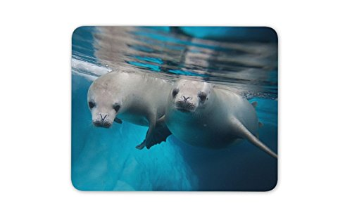 Cheeky Mouse - Cheeky Seal Pups Mouse Mat Pad - Scuba Diving Sea Seals Gift PC Computer
