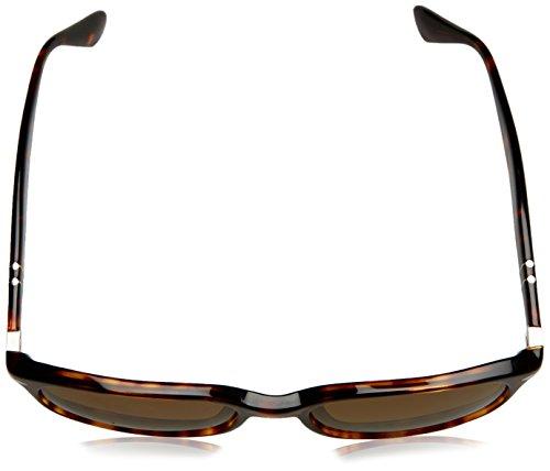 Havana Polarbrown Sonnenbrille Persol Marrón PO3164S qnztBY