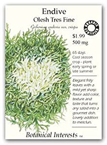 Botanical Interests 3120 Endive Olesh Tres Fine Organic Seed Packet