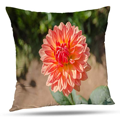 KJONG Dahlia Flower Nature Beautiful Dahlia Flower Garden Beautiful Square Decorative Pillow Case 20 x 20inch Zippered Pillow Cover for Bedroom Living Room(Two Sides Print) ()