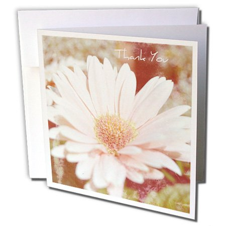 3dRose Vintage Gerbera Daisy Thank You Floral Flowers - Greeting Cards, 6 x 6 inches, set of 12 (gc_29229_2)