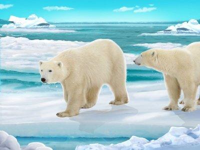 Poster de osos polares