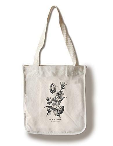 Lantern Press Amandes - Open Fruit - Vintage Bookplate - Adolphe Millot Artwork (100% Cotton Tote Bag - Reusable)