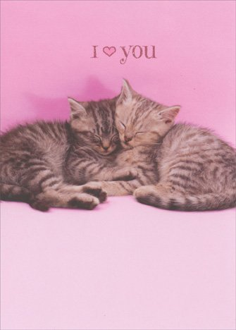 [Two Kittens Snuggling Funny Cat Valentine's Day Card] (Cat Valentine Greeting Cards)