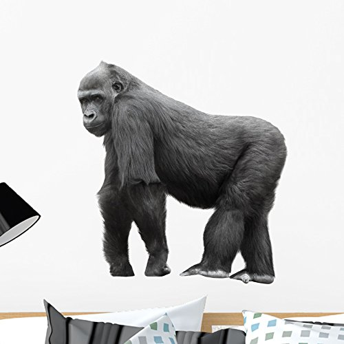 - Wallmonkeys Silverback Gorilla Background Wall Decal Peel and Stick Graphic WM83317 (24 in H x 24 in W)