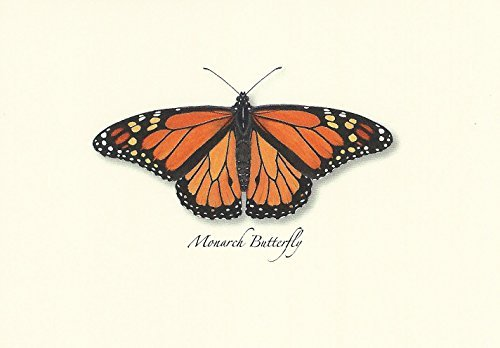 Monarch Butterfly Boxed Note Cards-- Set of 8 ()