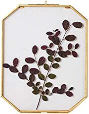 NCYP Wall Hanging 8X10 inches Long Octagon Herbarium Brass Glass Frame for Pressed Flowers, Dried Flowers, Poster, Double Glass, Floating Frame Style, Glass Frame only