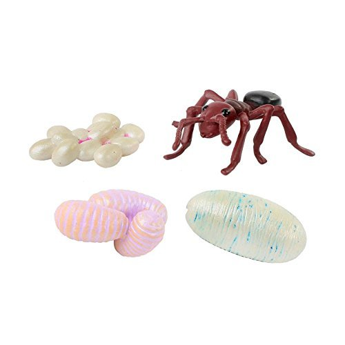 Insect Lore Ant Life Cycle Toy - 4 Piece Set Shows Life Cycle Of An Ant