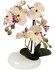 Amazon.de | Orchideen
