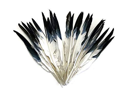 1/4 lbs - Black Tipped White Duck Pointer Primary Wing Wholesale Feathers (bulk) Imitation Eagle Hawk Feathers | Moonlight Feather ()