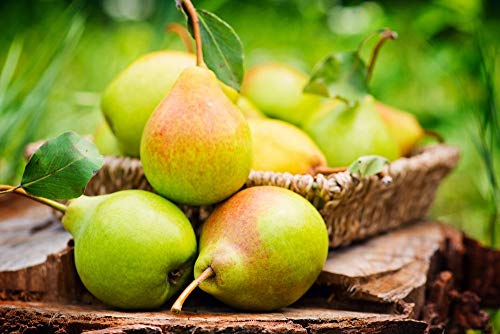 Organic Pears, 25 Pounds - California Sun-Dried Pear Halves, Non-GMO, Kosher, Unsulfured, Unsweetened, Non-Infused, Non-Oil Added, Non-Irradiated, Pesticide-Free, Vegan, Raw, Bulk by Food to Live (Image #5)