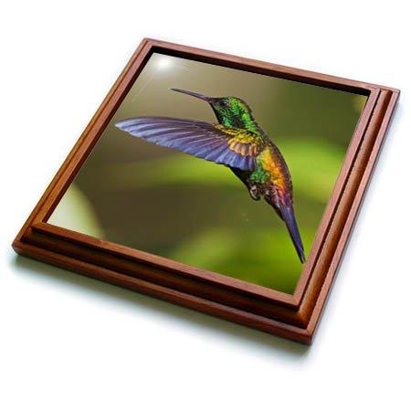 3dRose trv_277173_1 Hummingbird Trivet with Tile, 8 by 8''