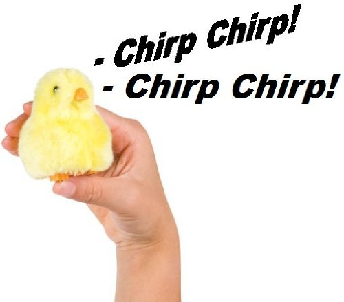 Chirpin Chick Novelty Toy -