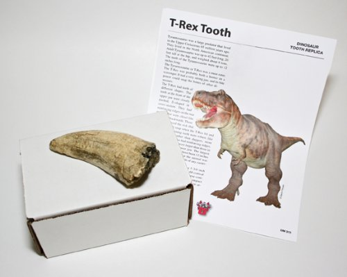(DM 313) T-Rex Tooth for sale  Delivered anywhere in USA