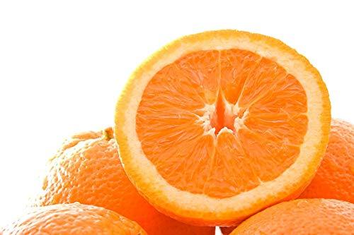(Heirloom Valencia Orange Tree 80 Seeds)