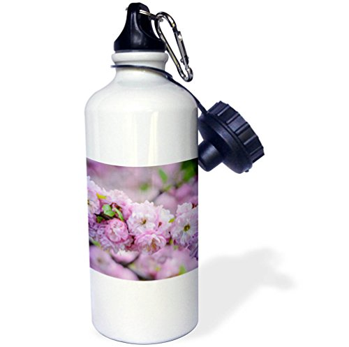 Plum Blossom Bottle (3dRose Alexis Photography - Flowers Sakura 2 - Cluster of beautiful pink flowering plum blossoms - 21 oz Sports Water Bottle (wb_272584_1))