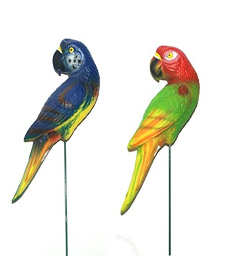 Pl. Parrot Garden Stick 5.51x3.94 In, Case of 36