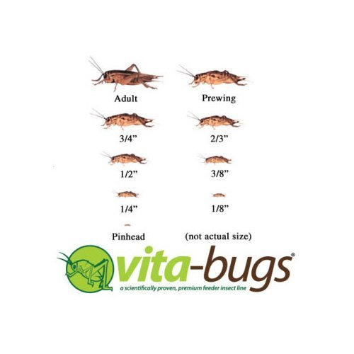 UPC 800443938027, Vita-Bugs 3/4 Crickets, 500 Count