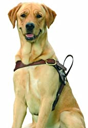 Service Dogs: Says Who? [Dogs and other animals are being trained to assist people with disabilities. Shouldn't they be certified by somebody and carry identification?]