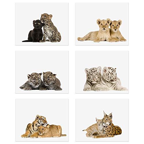 (Crystal Big Cat Cubs Prints - Set of 6 (8x10) Adorable Baby Kitten Wall Art Decor - Lion - Spotted Jaguar - Black Panther - Siberian Tiger - Bengal Tiger - Lynx )