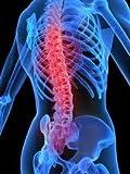 TRUE BACK The Original Back Pain Relief Back