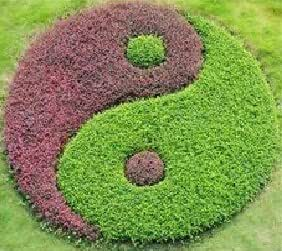Borde Jardín Japonés Yin Yang en Kit – 95 cm/Altura 8 cm: Amazon ...