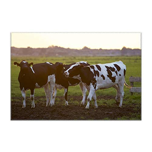 Brown Cattle On Green Lawn Grass During Daytime Table Mats,Placemat Non-Slip Washable Place Mats,Heat Resistant Kitchen Tablemats for Dining Table