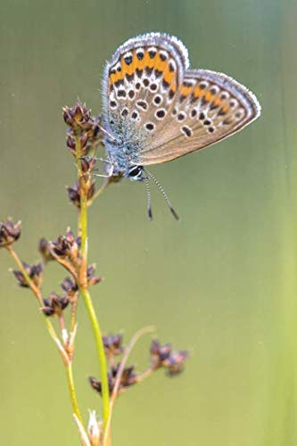 - Notebear: Female Silver Studded Blue Butterfly Preparing For Night Journal - Alternate Lined And Blank Pages (Photo Notebooks & Diaries)