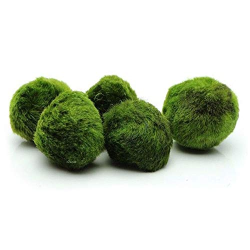Pack of 4 Marimo Moss Balls - 1.5in Live Aquarium Plant Nano Marimo Balls Beautiful Decor or a DIY Gift for Fish tank - Wedding or party favors by Pevor